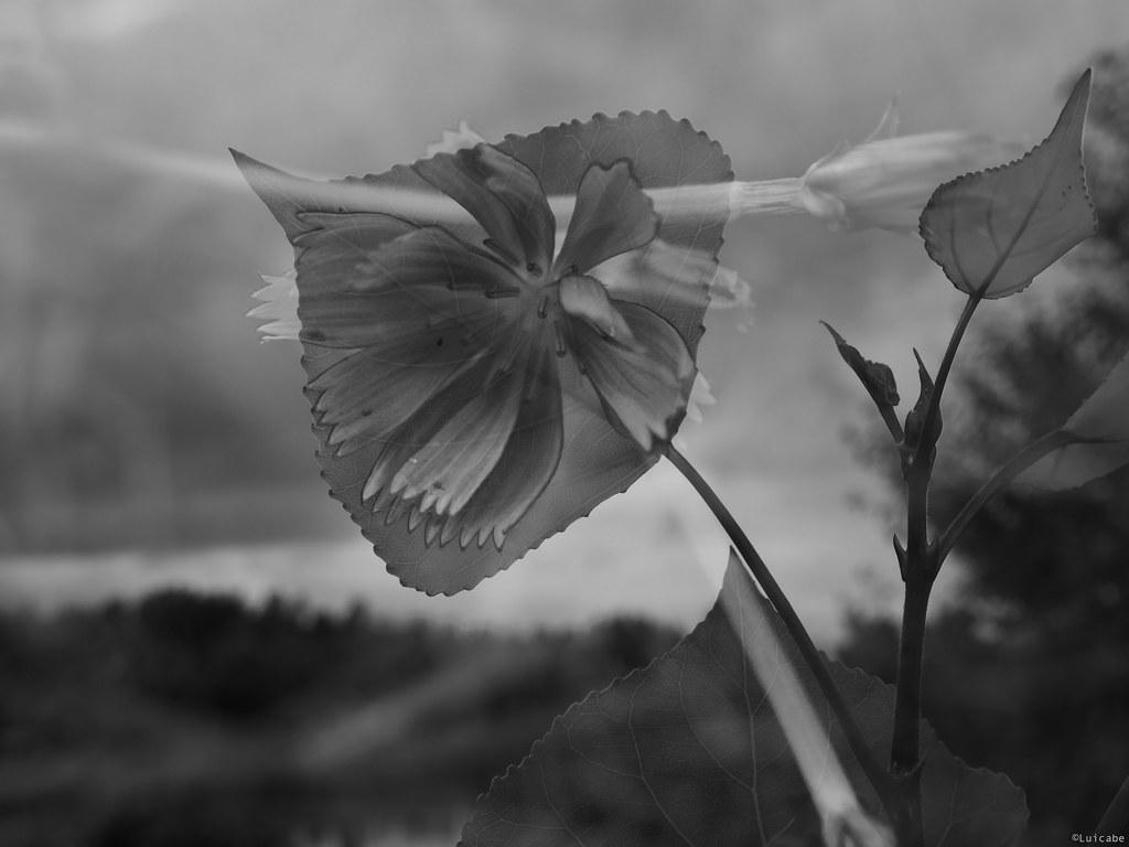 Lo que la Naturaleza no da, lo hace la fotografía