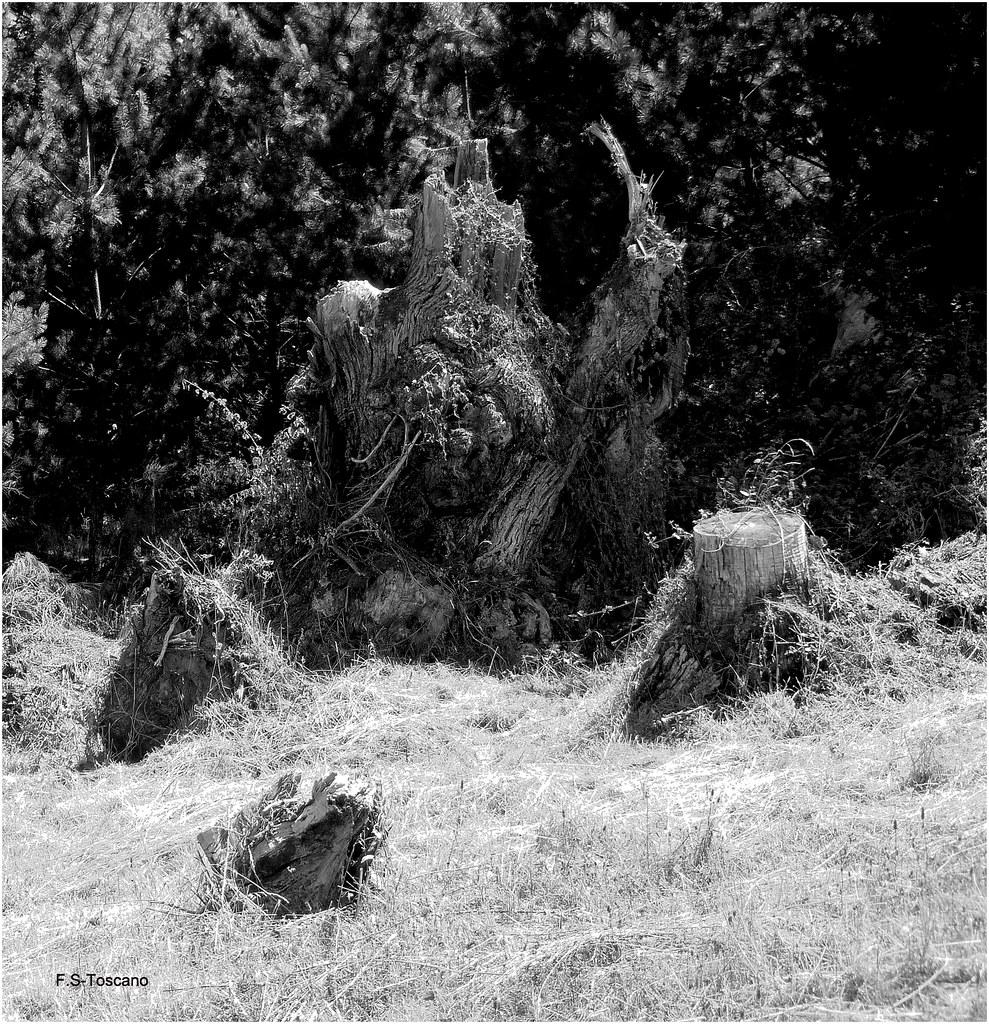 Madera vieja 5. Old wood 5.