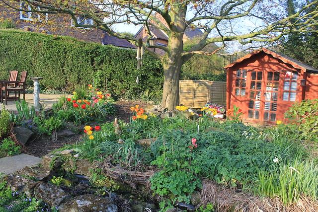 Springtime in our Garden, Seckington, UK.