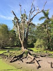 Branchless