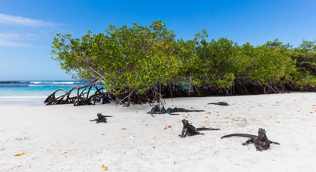 Galapagos4