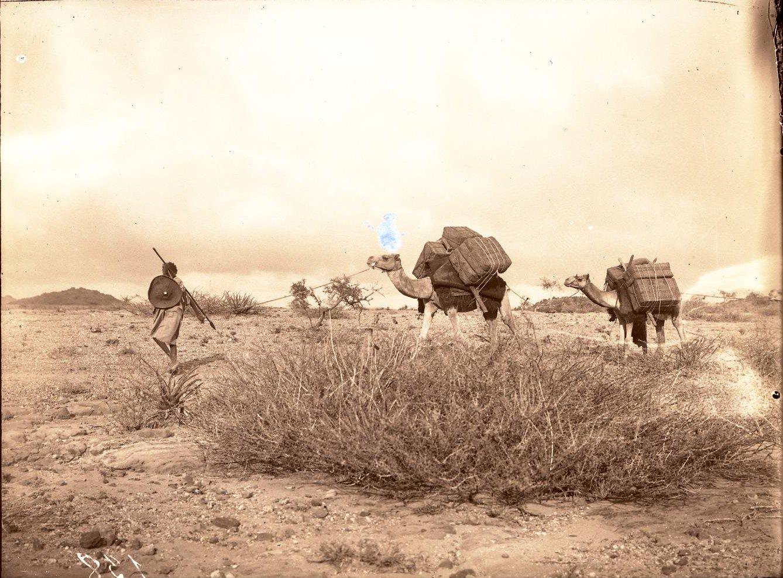 138. В сомалийской пустыне. Близ Ханджина