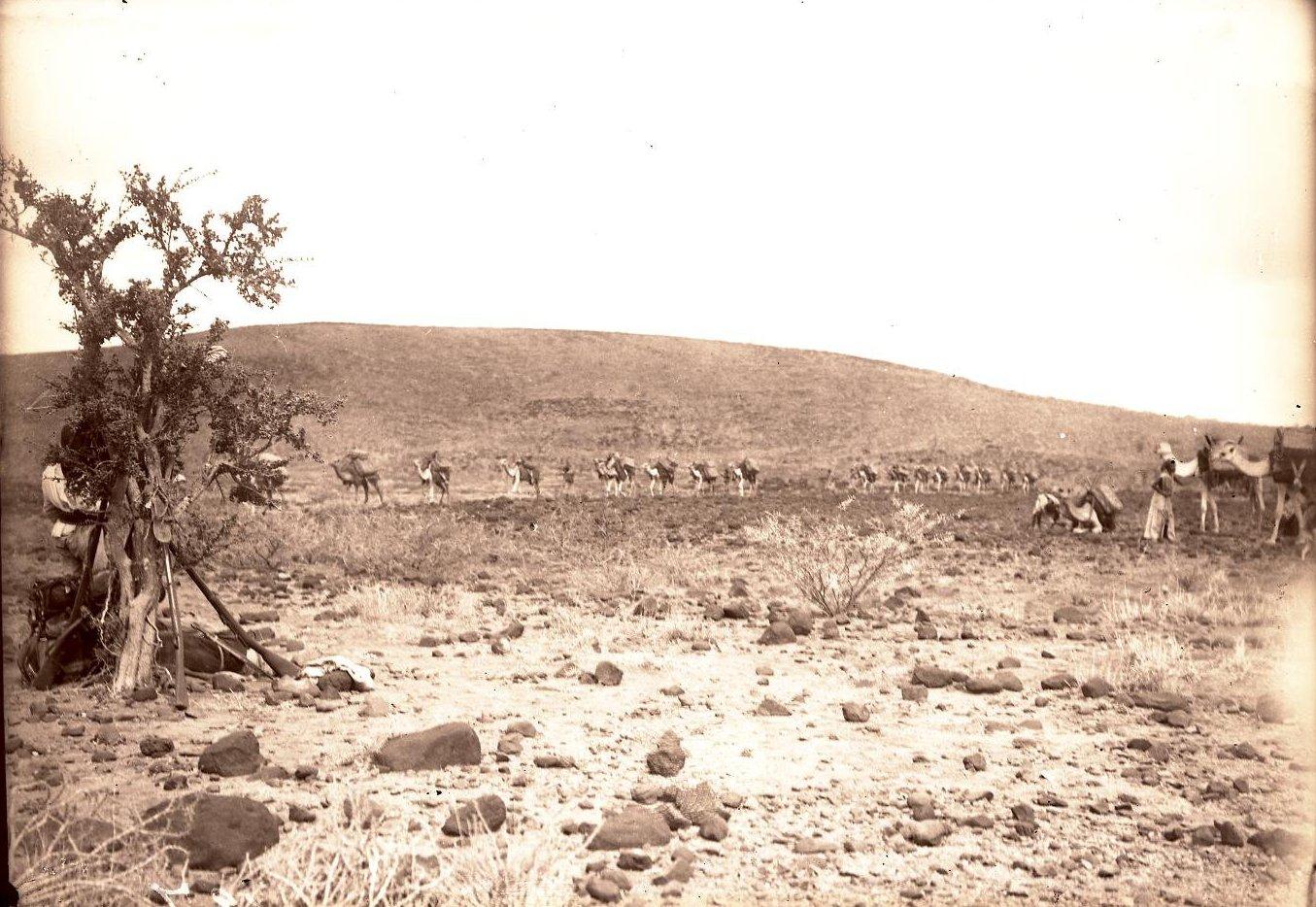 127. В сомалийской пустыне. Гурума (общий вид каравана)