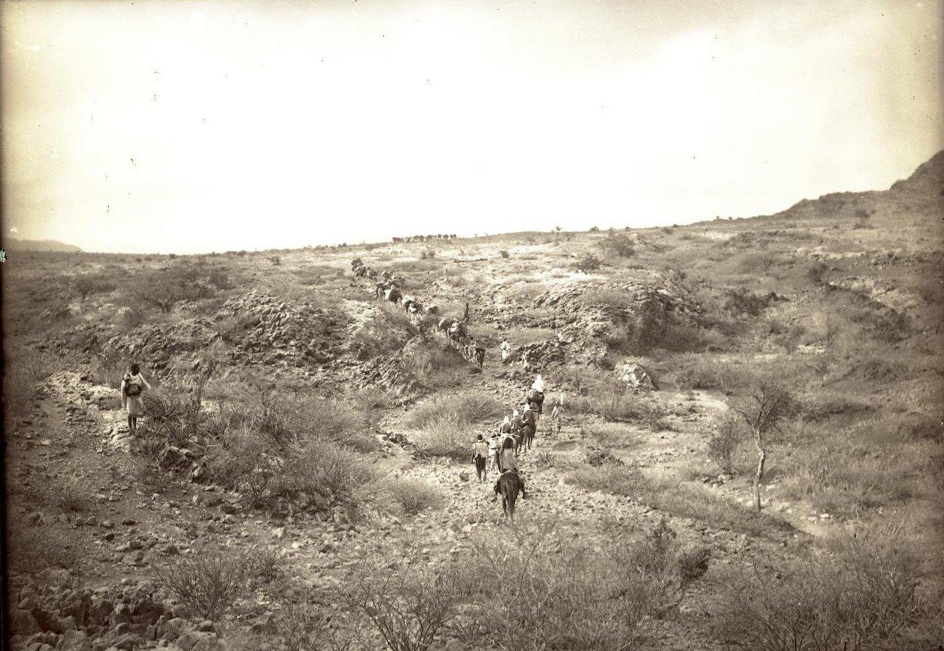 134. В сомалийской пустыне. Караван в пустыне