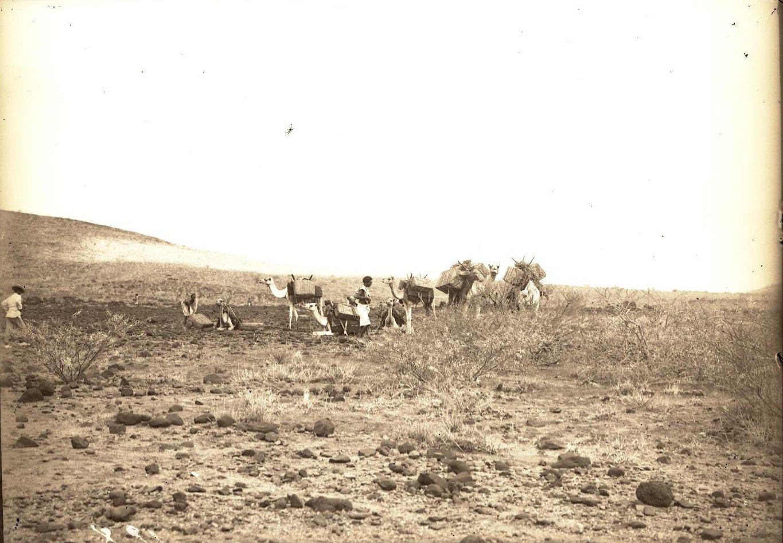 128. В сомалийской пустыне. Гурума (часть каравана)..