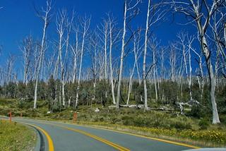 Alpine Way. Driving in Kosciuszko National Park