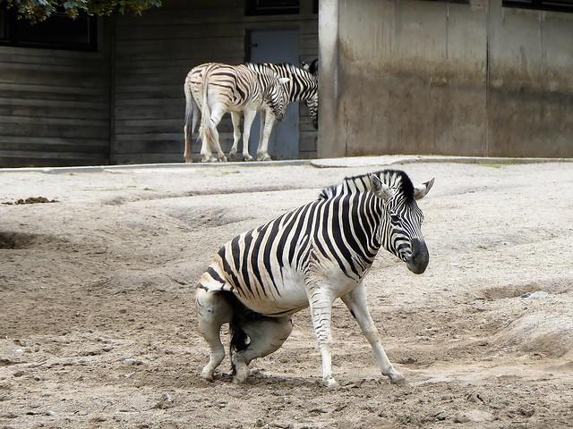 Zoo Duisburg
