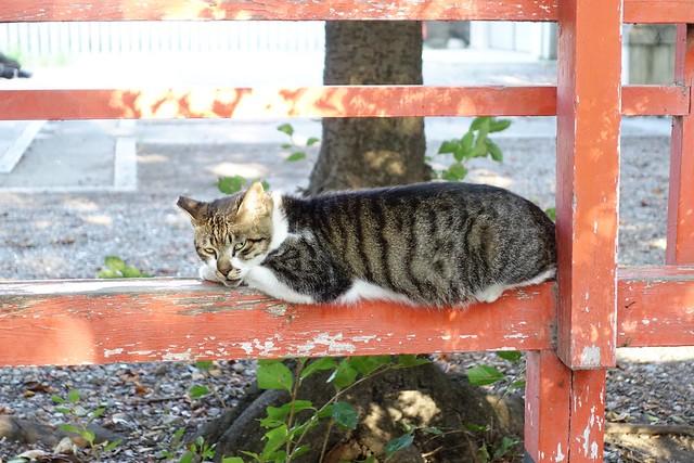Today's Cat@2019-08-11