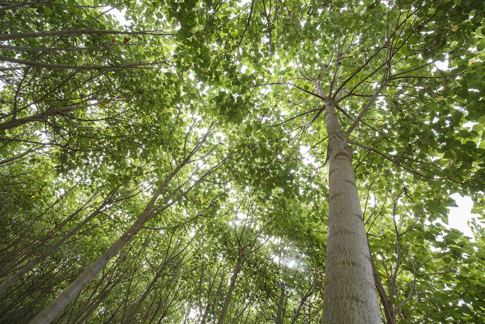Felére csökkent az erdőben élő gerinces állatok populációja fél évszázad alatt