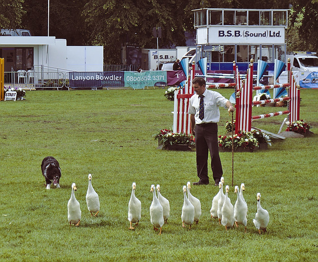 Meirion Owen and his Quack Pack