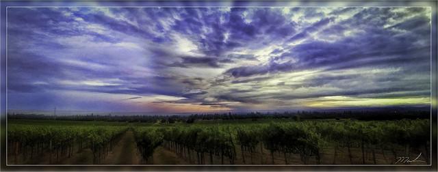 vineyard sunset 2