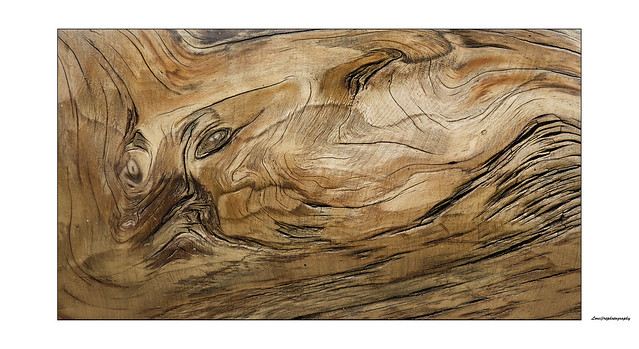 deformed face on a wooden trunk