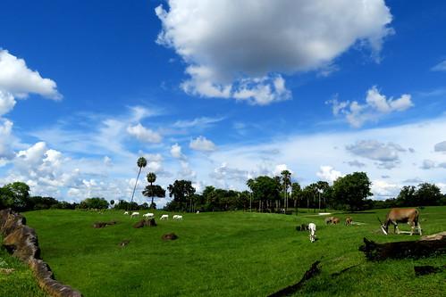 busch gardens tampa fl florida clouds landscape animals trees palm