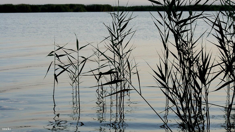 La albufera Valenciana