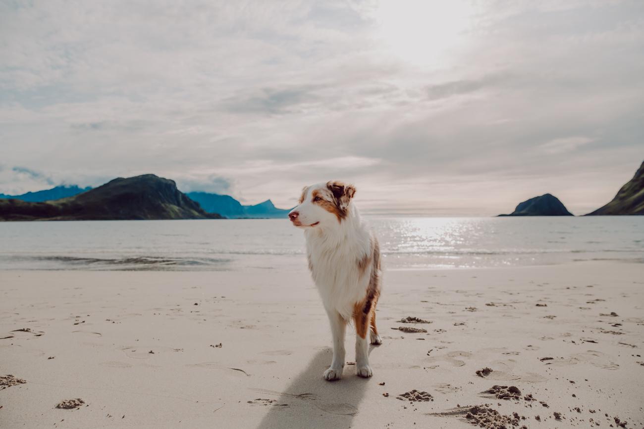 haukland beach lofootit-13