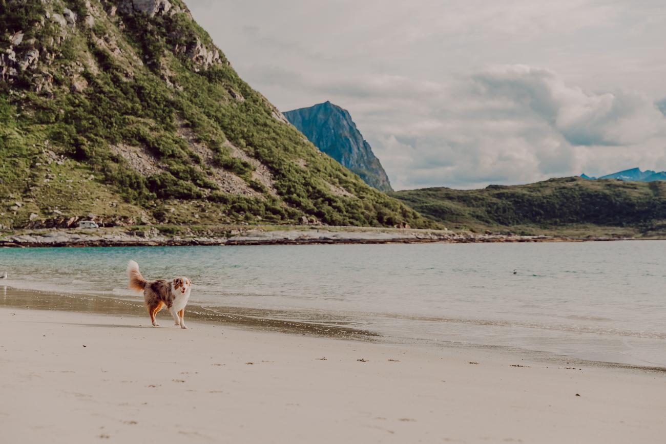 haukland beach lofootit-11