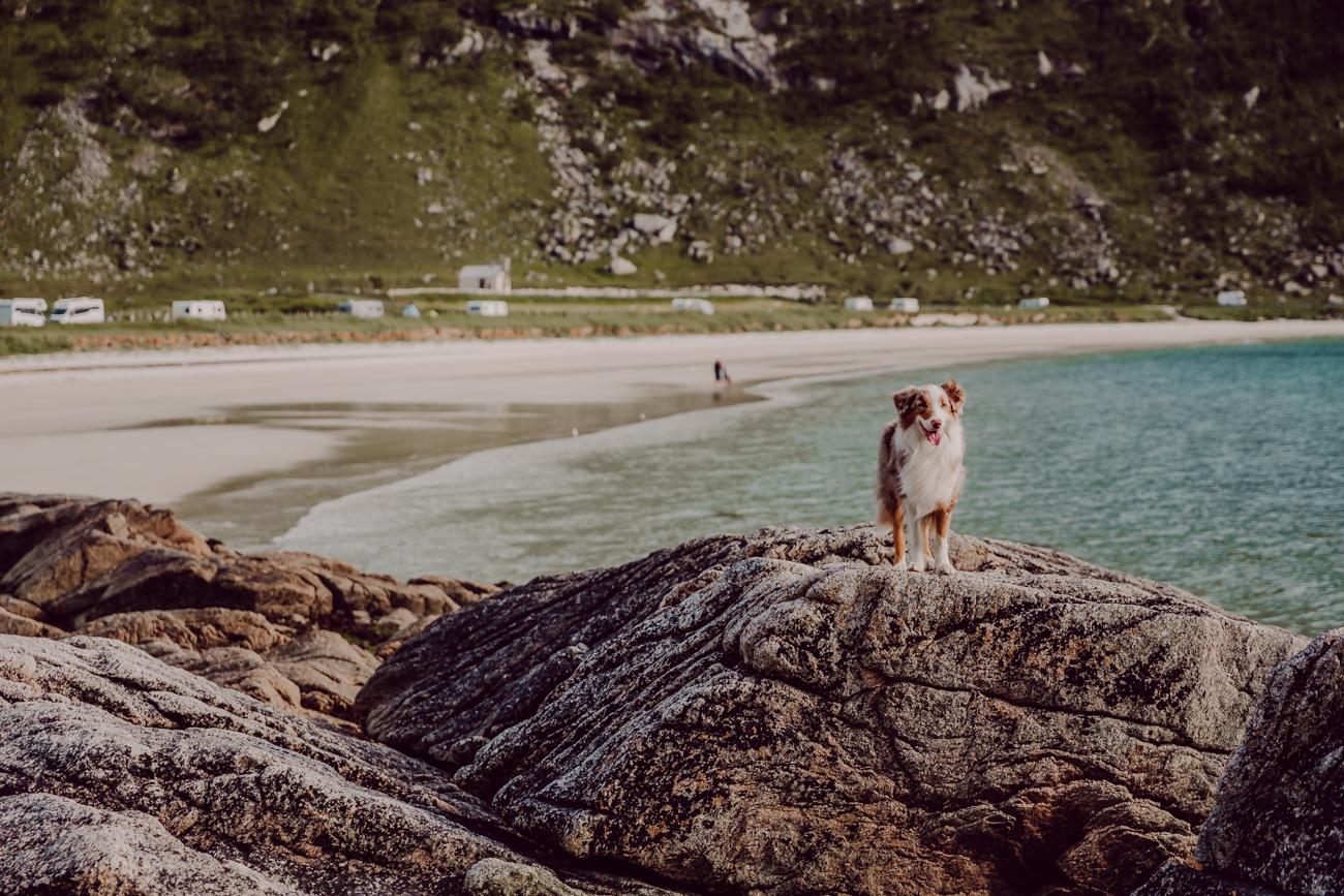 haukland beach lofootit-7