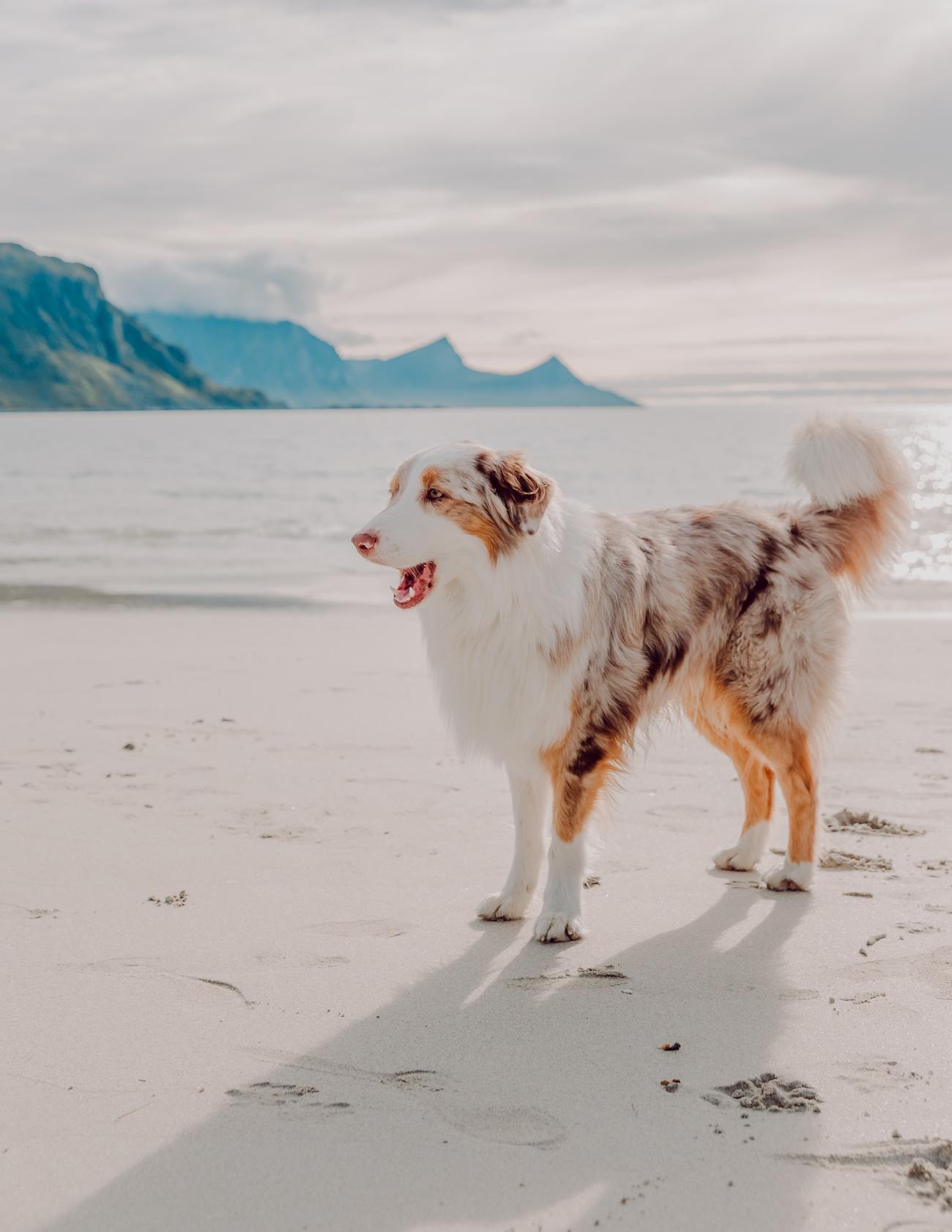 id haukland beach lofootit-12