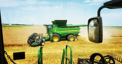 Schemper Harvesting