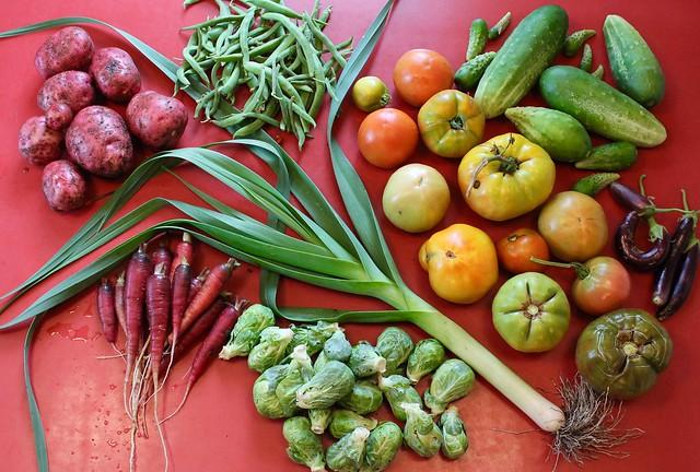 An August morning harvest