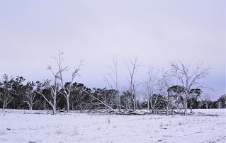Near Armidale this morning