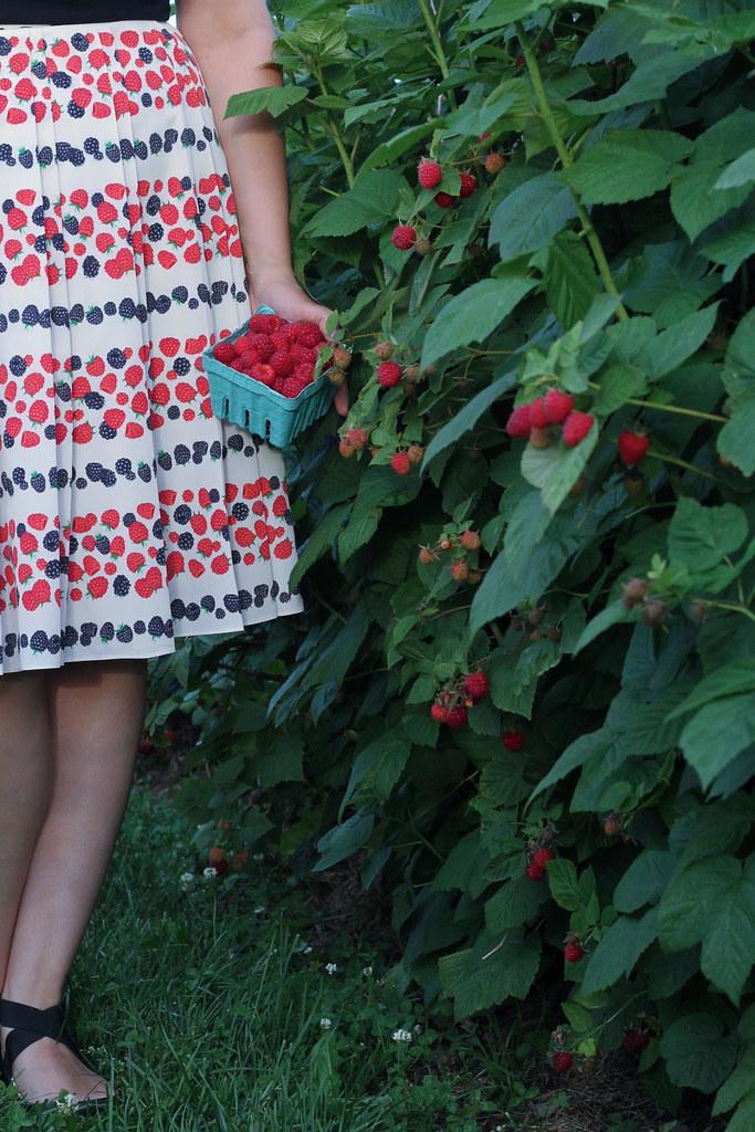 raspberry picking rochester ny