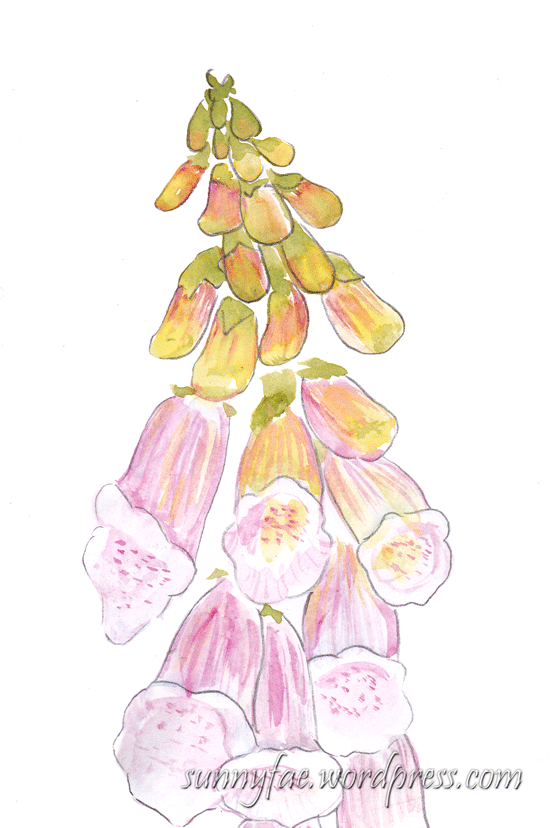 foxglove watercolour sketch