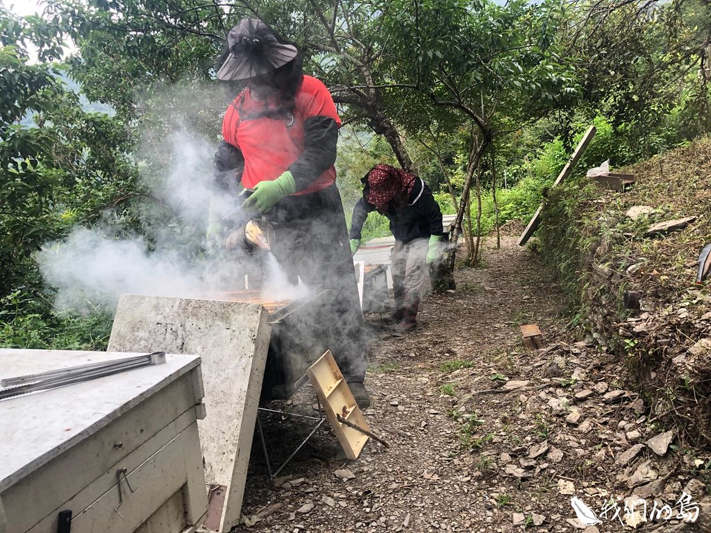 颱風後留在阿禮的包泰德和古秀慧,投入林下經濟的養蜂事業。