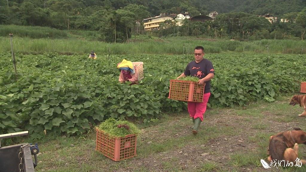 林春福是老獵人,也是新農民,三年前他和族人合作種龍鬚菜,為部落創造新產業。