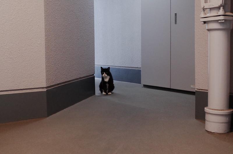 裏庭の守り猫たまこさん