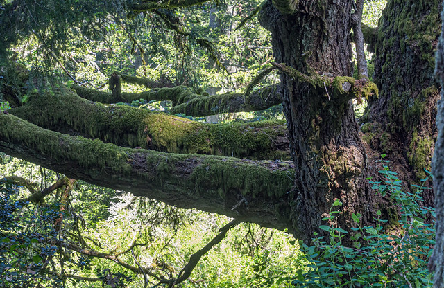 Moss on the branches