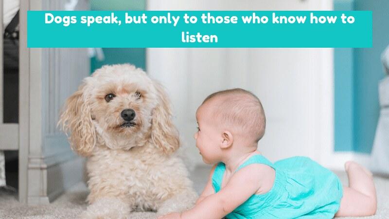 national dog day 2019
