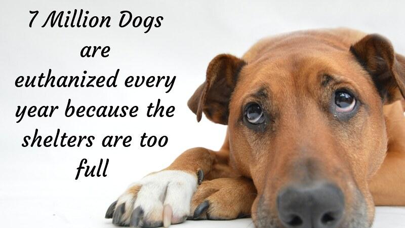 national dog day 2019 images