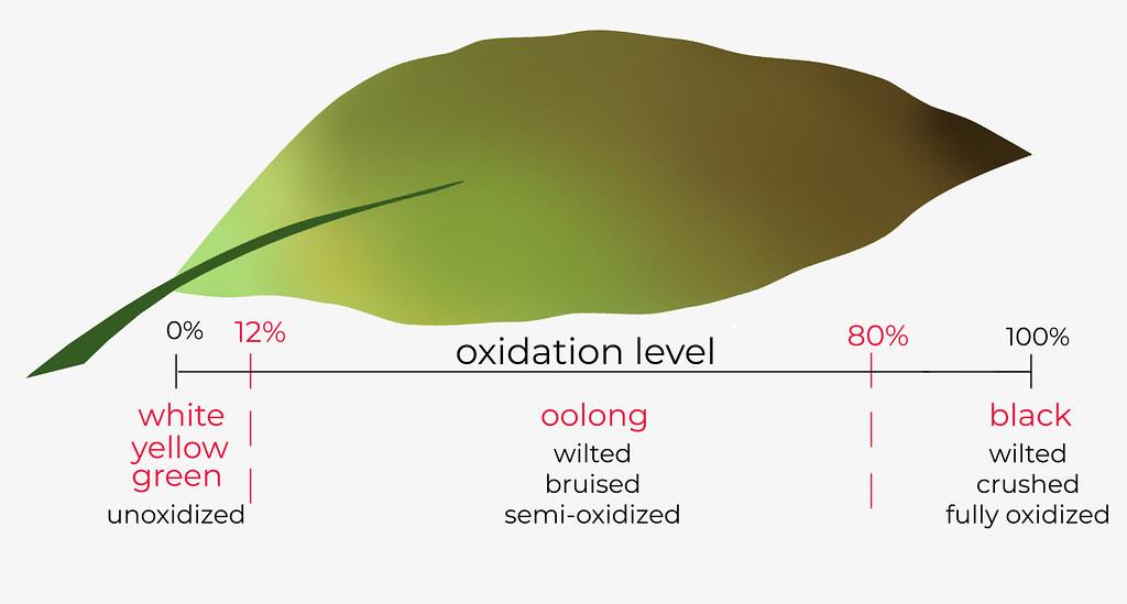 oolong oxidation-level