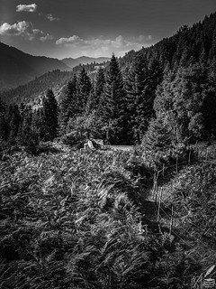 Ferns, Firs & Mountainous Resting Place