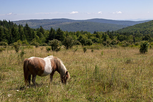 grayson pony