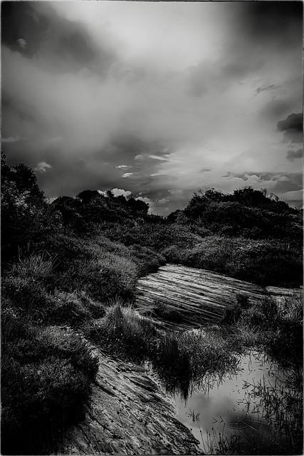 Wetlands Outcrop