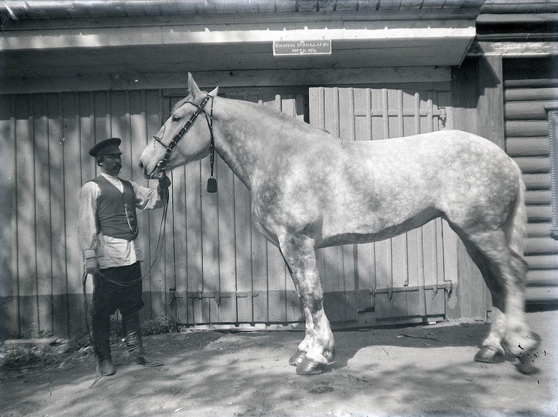 17. 1898. 14 июня. Усадьба И. Ф. Мамонтова «Киреево». Конюх и лошадь в яблоках