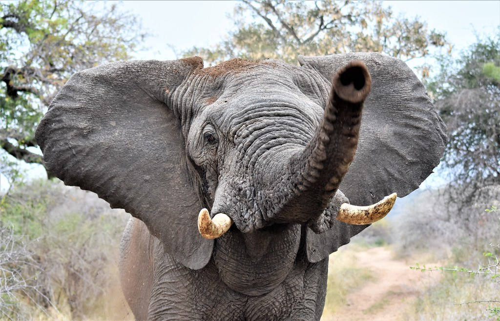 Every Elephant has thier Day!