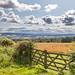 Tyne Valley near Corbridge
