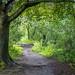 Path by the River Tyne, Corbridge