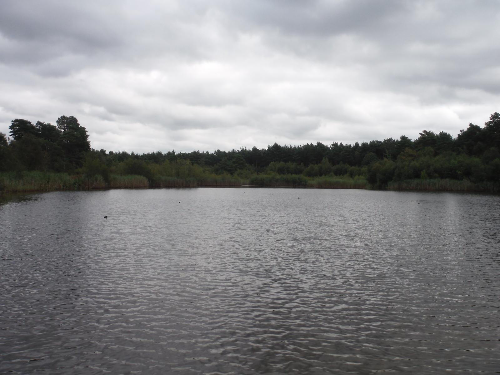Black Pond, Esher Common SWC Short Walk 17 - Oxshott Heath, Esher and West End Commons