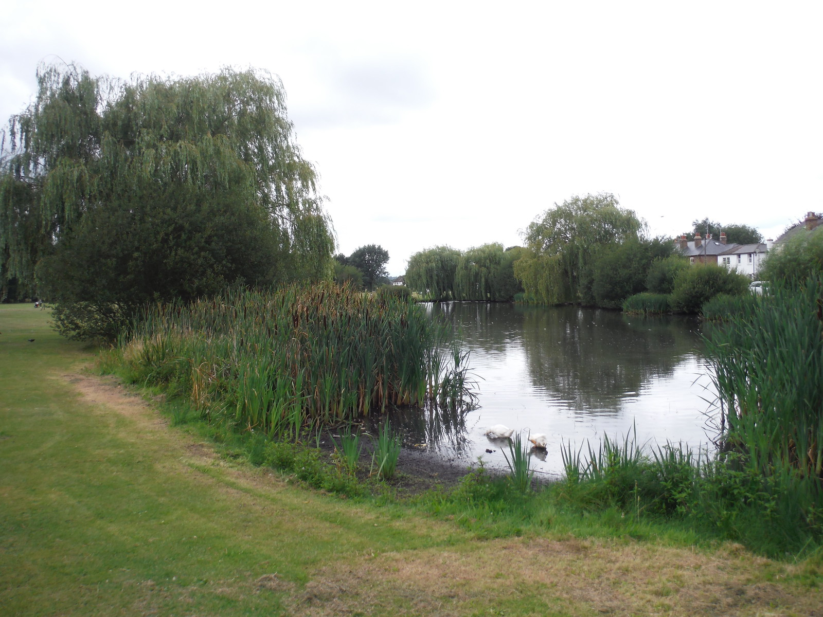 Prince of Wales Pond, West End SWC Short Walk 17 - Oxshott Heath, Esher and West End Commons