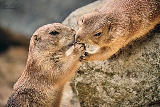 HHFotografie_Zoo_Hannover000824