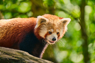 HHFotografie_Zoo_Hannover000821