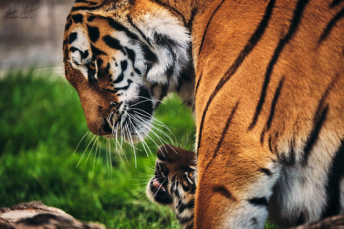 HHFotografie_Zoo_Hannover000818