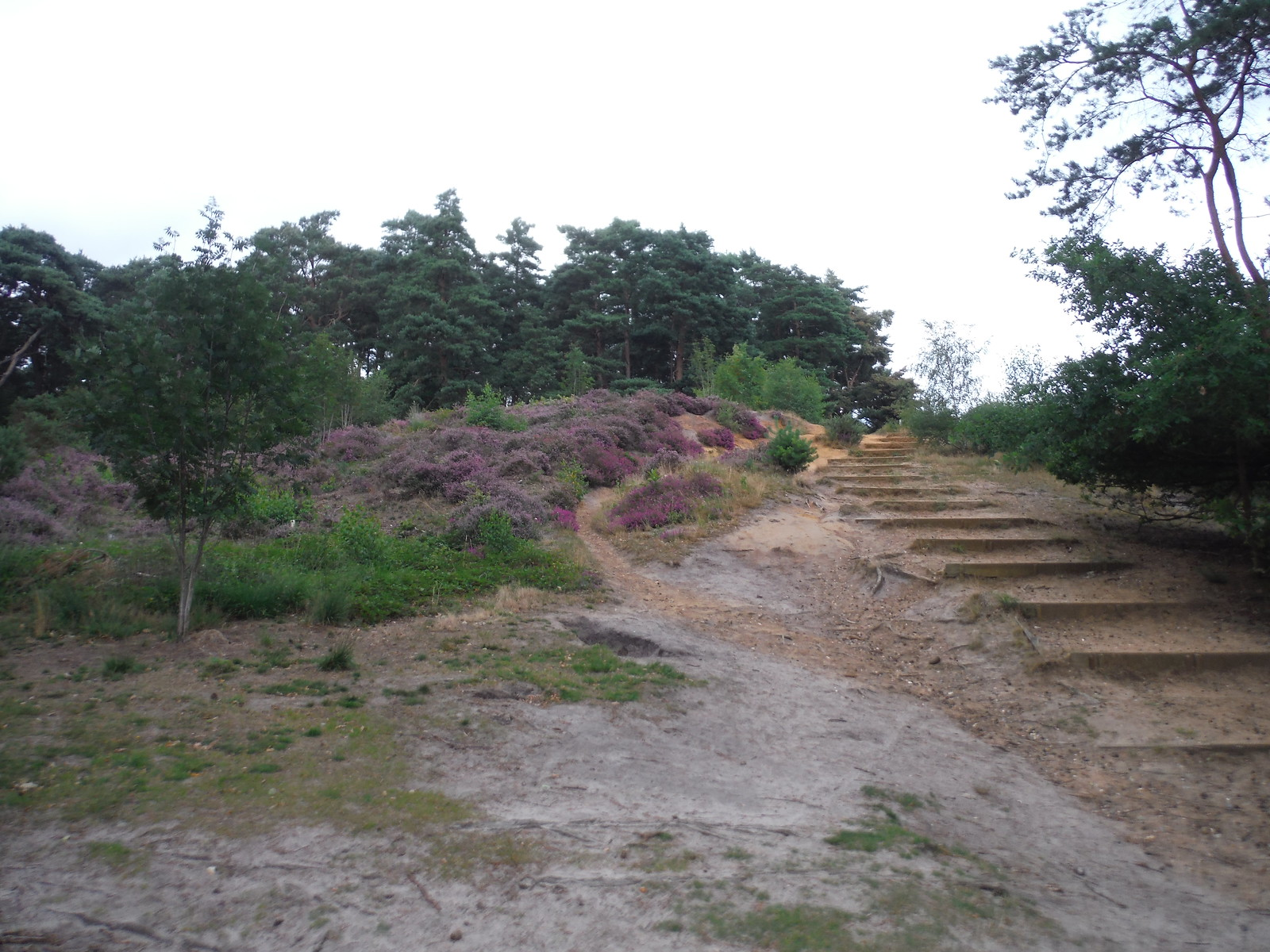 Stepped Path down South Slope, Oxshott Heath SWC Short Walk 17 - Oxshott Heath, Esher and West End Commons