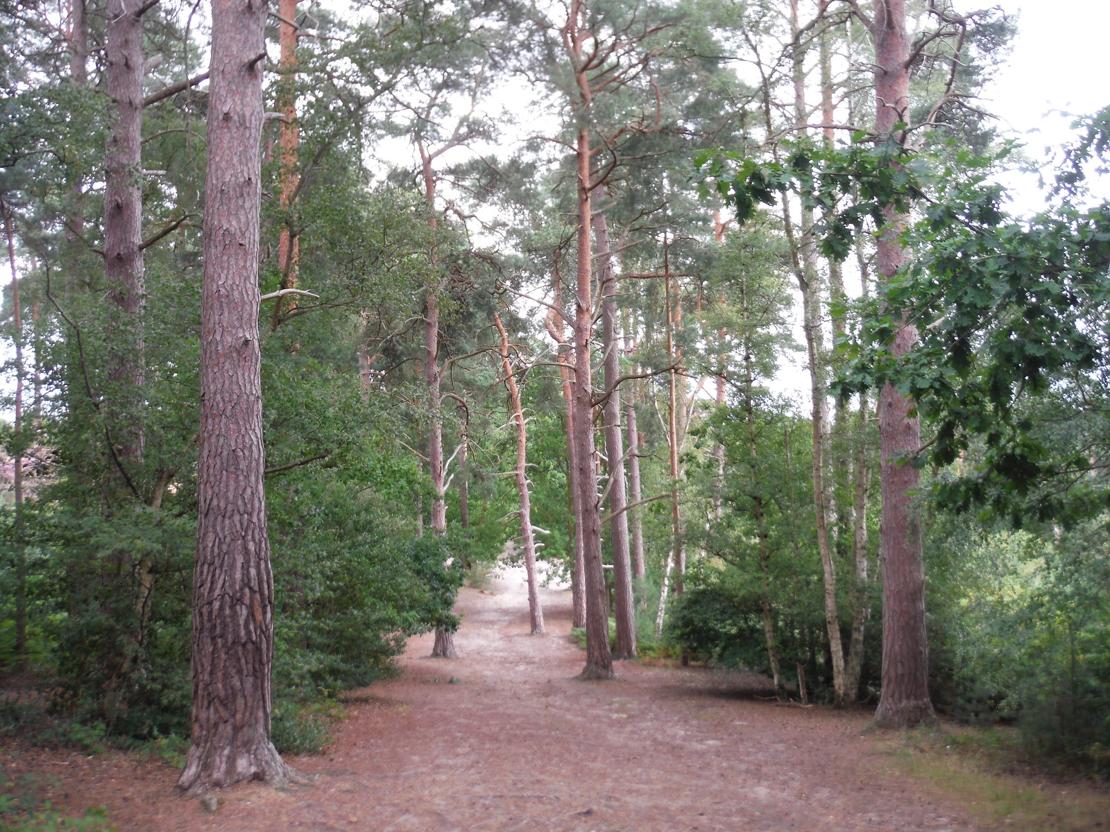 Oxshott Heath SWC Short Walk 17 - Oxshott Heath, Esher and West End Commons
