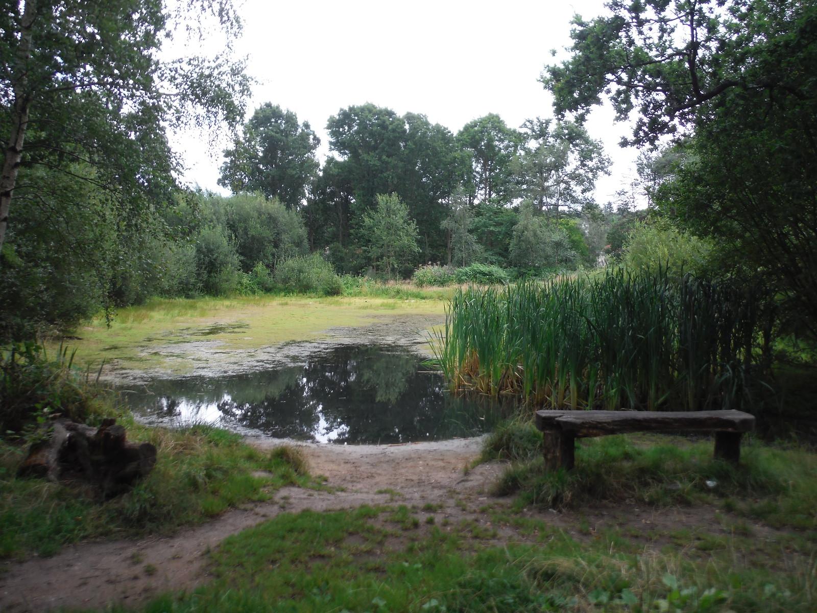 Halfpenny Pond, West End SWC Short Walk 17 - Oxshott Heath, Esher and West End Commons