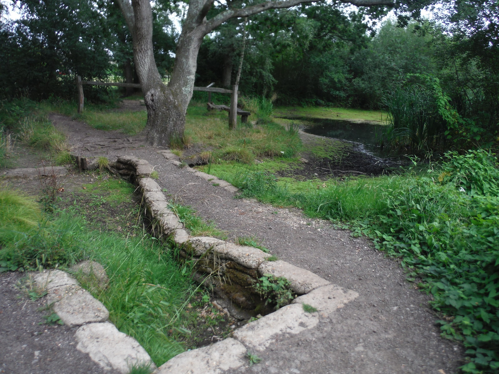 Fork in path at Halfpenny Pond, West End SWC Short Walk 17 - Oxshott Heath, Esher and West End Commons